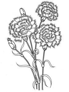 raskraski-cvety-gvozdika-5