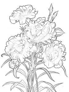 raskraski-cvety-gvozdika-8