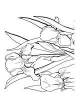 raskraski-cvety-iris-4