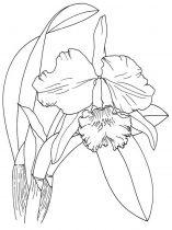 raskraski-cvety-iris-6