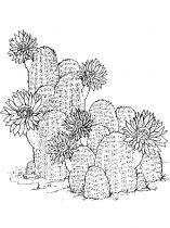raskraski-cvety-kaktus-15