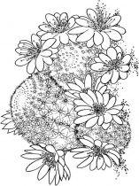 raskraski-cvety-kaktus-4