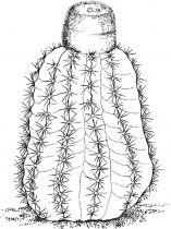 raskraski-cvety-kaktus-5