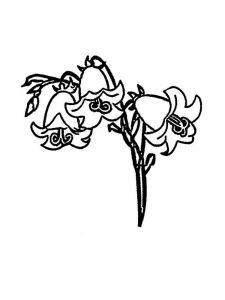 raskraski-cvety-kolokolchik-1