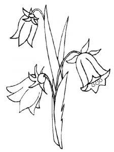 raskraski-cvety-kolokolchik-11
