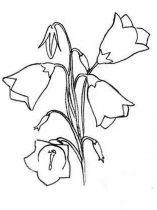 raskraski-cvety-kolokolchik-14