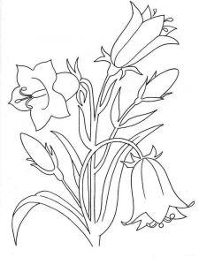 raskraski-cvety-kolokolchik-5