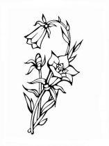 raskraski-cvety-kolokolchik-9