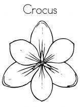 raskraski-cvety-krokus-1