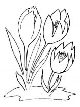 raskraski-cvety-krokus-7