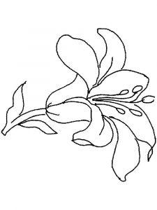 raskraski-cvety-lilija-15