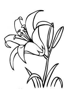 raskraski-cvety-lilija-5