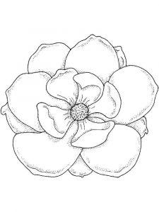 raskraski-cvety-magnolia-1