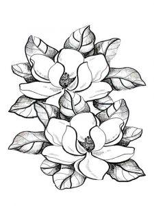 raskraski-cvety-magnolia-10