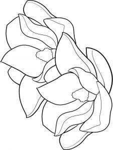 raskraski-cvety-magnolia-3