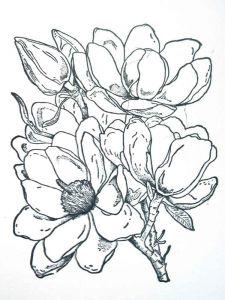raskraski-cvety-magnolia-4