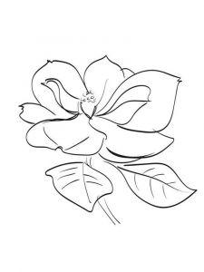 raskraski-cvety-magnolia-5