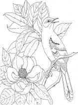 raskraski-cvety-magnolia-8