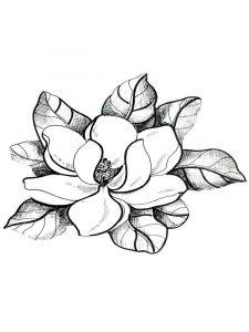 raskraski-cvety-magnolia-9