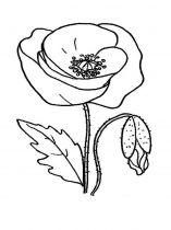 raskraski-cvety-mak-13