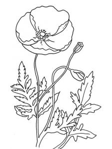 raskraski-cvety-mak-14