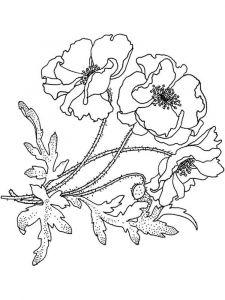 raskraski-cvety-mak-17