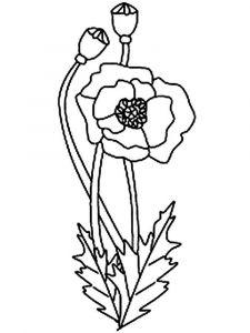 raskraski-cvety-mak-7