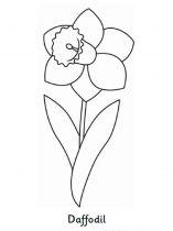 raskraski-cvety-narciss-2