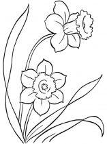 raskraski-cvety-narciss-8