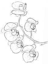 raskraski-cvety-orhideja-10
