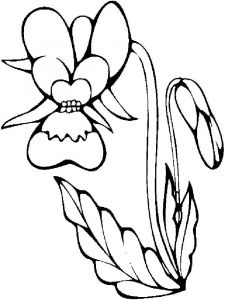 raskraski-cvety-orhideja-11