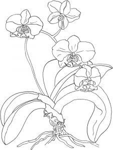 raskraski-cvety-orhideja-13