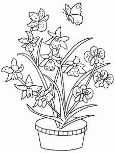 raskraski-cvety-orhideja-15