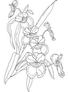 raskraski-cvety-orhideja-2