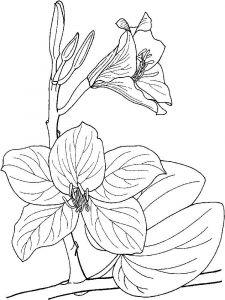 raskraski-cvety-orhideja-6