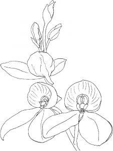 raskraski-cvety-orhideja-7