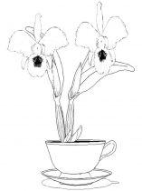 raskraski-cvety-orhideja-9