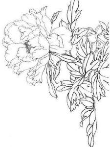 raskraski-cvety-pion-3