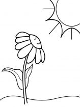 raskraski-cvety-romashki-12