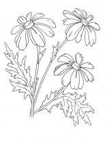 raskraski-cvety-romashki-14