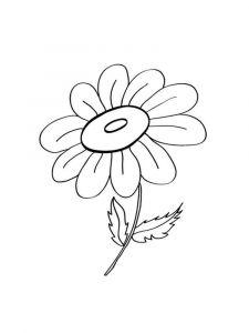 raskraski-cvety-romashki-15