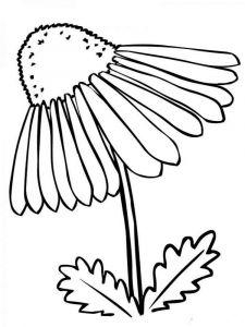 raskraski-cvety-romashki-17