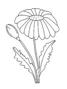 raskraski-cvety-romashki-2