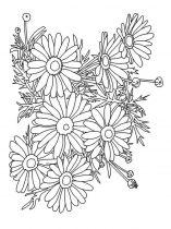 raskraski-cvety-romashki-5