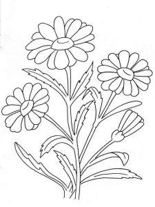 raskraski-cvety-romashki-9