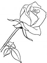raskraski-cvety-rose-10
