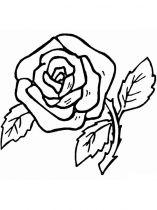 raskraski-cvety-rose-11