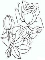 raskraski-cvety-rose-13