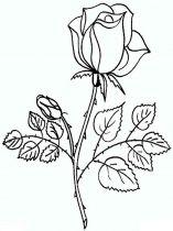 raskraski-cvety-rose-16