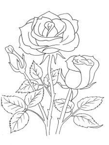 raskraski-cvety-rose-19